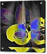 Lovely II Acrylic Print