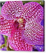 Orchid Lovely In Pink And White Acrylic Print
