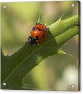 Lovely Lady Bug Acrylic Print