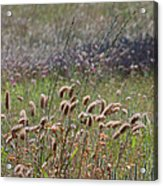 Lovely Layers Of Grass Acrylic Print
