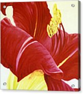 Lovely Lily Floral Print Acrylic Print