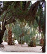 Lovely Oase Desert Camp Sinai Egypt Acrylic Print