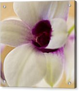 Lovely Orchid Acrylic Print by Dana Moyer