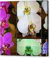 Lovely Orchids - A Collage Acrylic Print