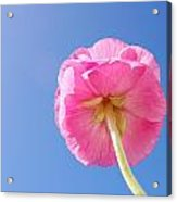 Lovely Pink Flower Series 5 Or 5 Acrylic Print