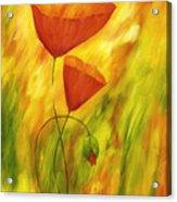 Lovely Poppies Acrylic Print