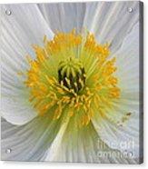 Lovely White Flower Square Acrylic Print