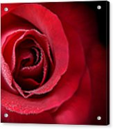 Love's Eternal Red Rose  Acrylic Print