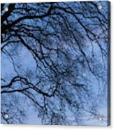 Low Angle View Of Tree At Dawn, Dark Acrylic Print