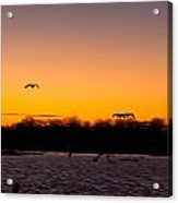Low Flyby Acrylic Print