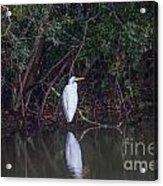 Lowcountry Pond Life Acrylic Print