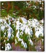 Lowcountry Snow Acrylic Print