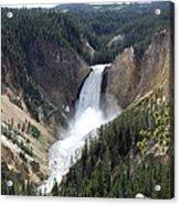 Lower Falls Yellowstone Acrylic Print