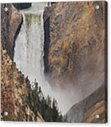 Lower Falls - Yellowstone Acrylic Print