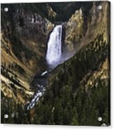 Lower Yellowstone Falls Fall Acrylic Print