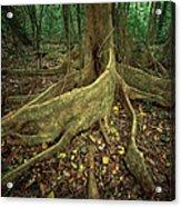 Lowland Tropical Rainforest Acrylic Print