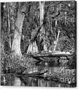 Loxahatchee Black And White Acrylic Print