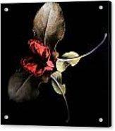 Lr 002 Acrylic Print