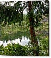 Lush Green At Starvation Lake Acrylic Print