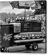 Lucky Dogs In Jackson Square Nola Bw Acrylic Print