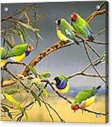 Lucky Seven - Gouldian Finches Acrylic Print