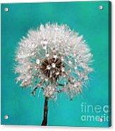Lucky Wish Acrylic Print