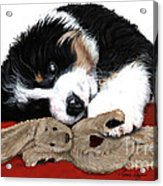 Lullaby Berner And Bunny Acrylic Print