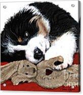 Lullaby Berner And Bunny Acrylic Print by Liane Weyers