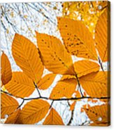 Luminescent Leaves Acrylic Print