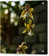 Luminous Chain Of Orchids Acrylic Print