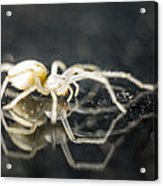 Luminous Spider Acrylic Print