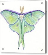 Luna Moth Actias Luna Acrylic Print