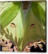 Luna Moth Faux Eyes Acrylic Print