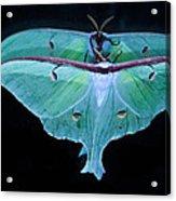 Luna Moth Mirrored Acrylic Print