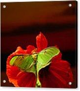 Luna Moth Poppy Evening Sky Acrylic Print