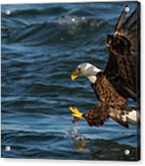 Lunch Time  Acrylic Print by Glenn Lawrence