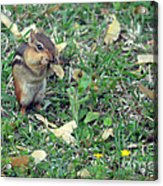 Lunch Time Photo B Acrylic Print