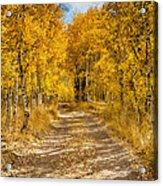 Lundy Canyon Pathway Acrylic Print