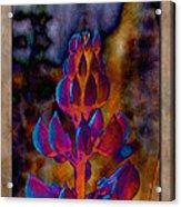 Lupin Glow Acrylic Print