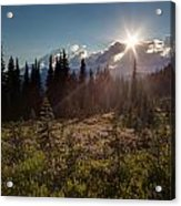 Lupine Field Sunstar Acrylic Print