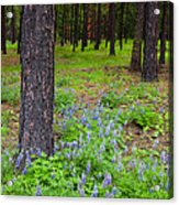 Lupine Forest Acrylic Print