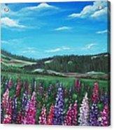 Lupine Hills Acrylic Print