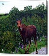 Lupine Loving Moose Acrylic Print