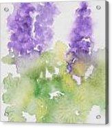 Lupine Acrylic Print