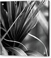 Luscious Lines Acrylic Print