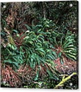 Lush Ferns Of The Forest Acrylic Print