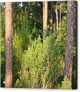 Lush Forest Acrylic Print