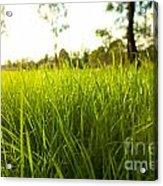 Lush Grass Acrylic Print