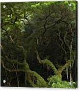 Lush Green Acrylic Print
