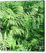 Lush Green Fern Acrylic Print